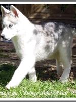 Ouchka (presque 3 mois)