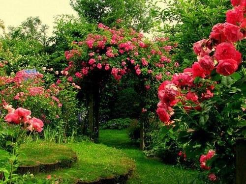 Mon Petit Jardin Secret ♥ ♥