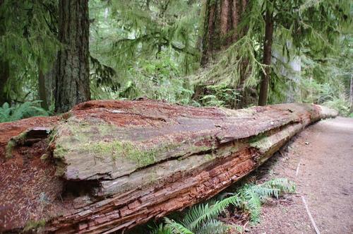Jour 23 - Vancouver Island - Pacific Rim