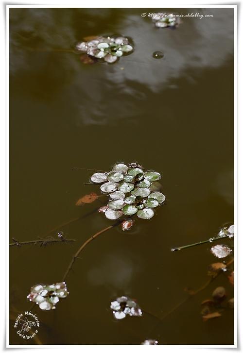Dans l'eau...
