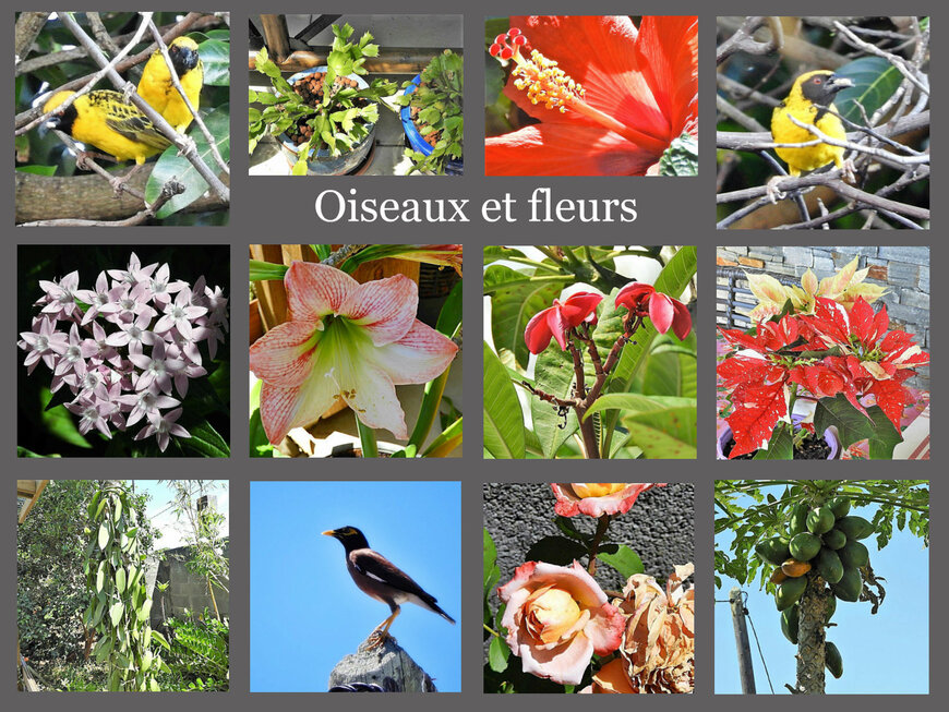 Oiseaux et fleurs dans mon jardin (2/3)...