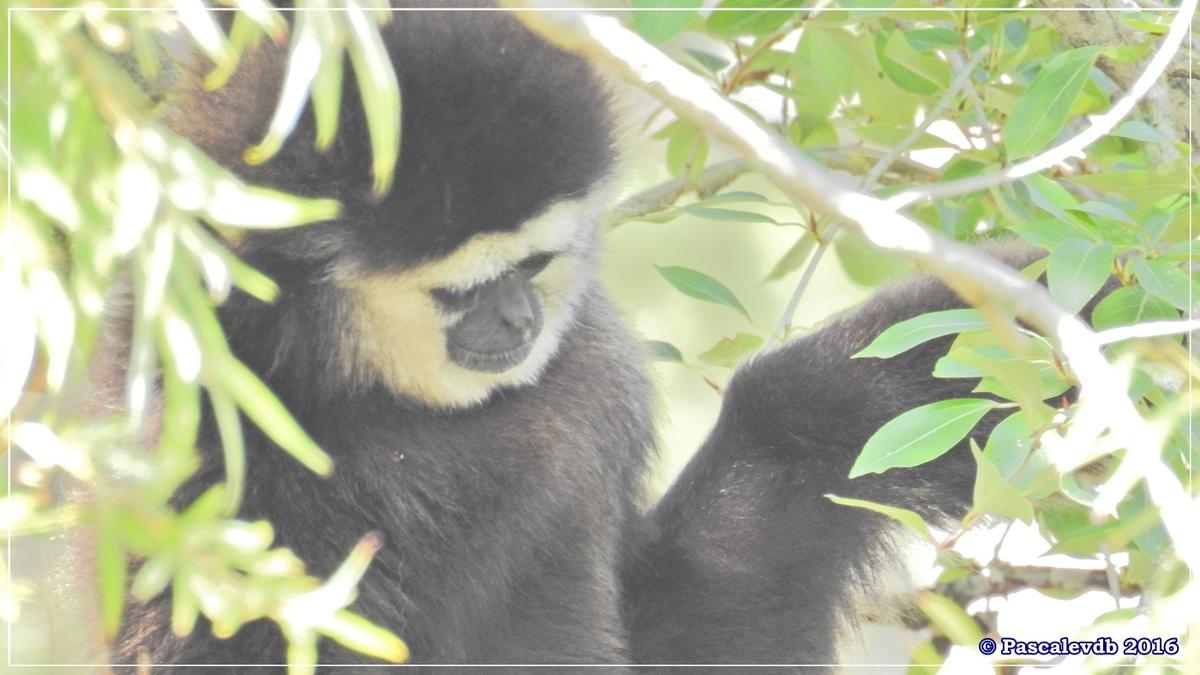 Zoo du Bassin d'Arcachon - Août 2016 - 3/15