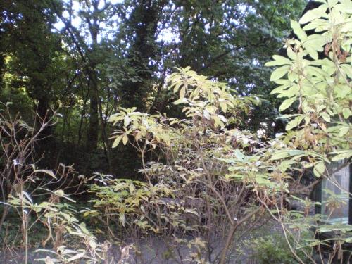 Splendeur nature : Parc Félix Hap