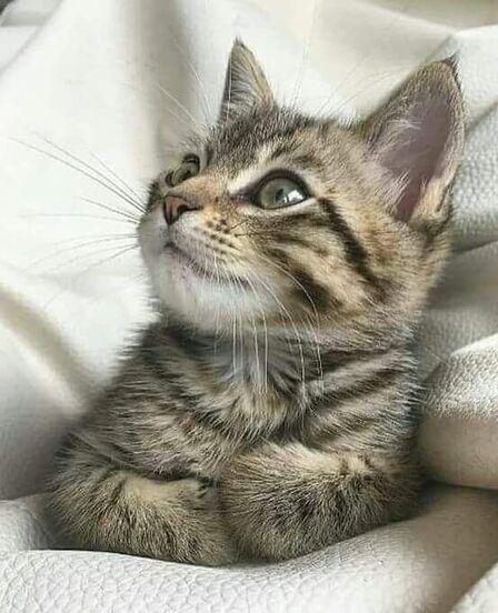 Mowgli a 4 mois ,mon nouvel amour