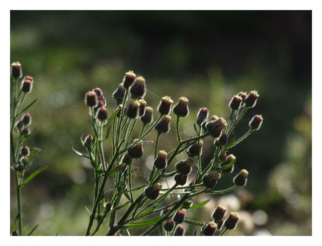 herbes-2