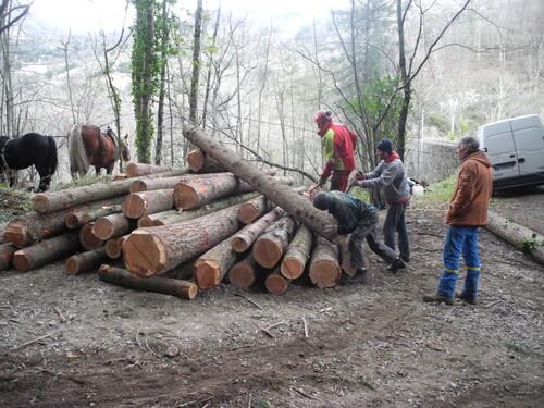 Nous irons tous au bois