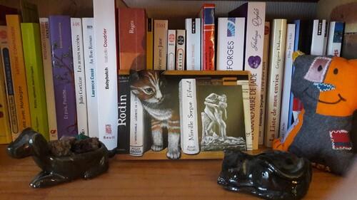 Chats de bibliothèque (1)