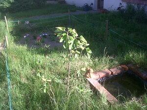 """Jardin """"fleurs"""" devant la maison, dernière photo: les capucines devant la fenêtre de la cuisine"""