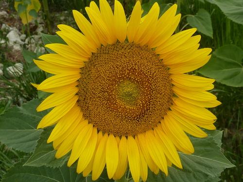 Grand soleil sur la Dordogne