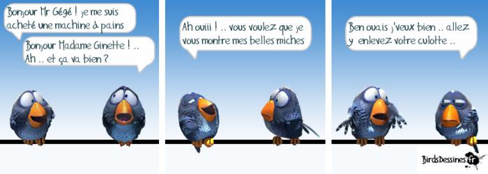 Birds ... du samedi. 24)