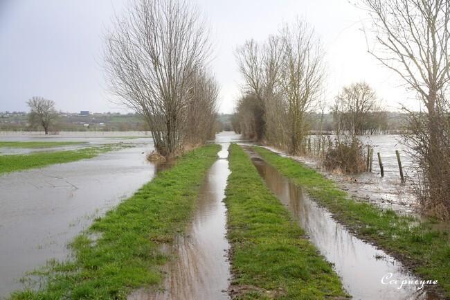 Loire 1411