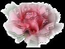 PNG-virágok