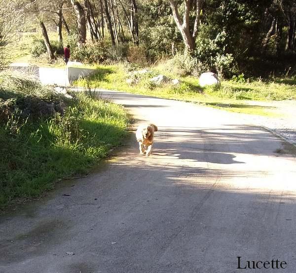 Promenade dans le bois des Semboules à Antibes