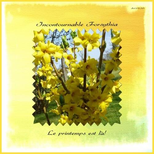 Du jaune, du jaune...
