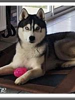 Neïko (1 an)