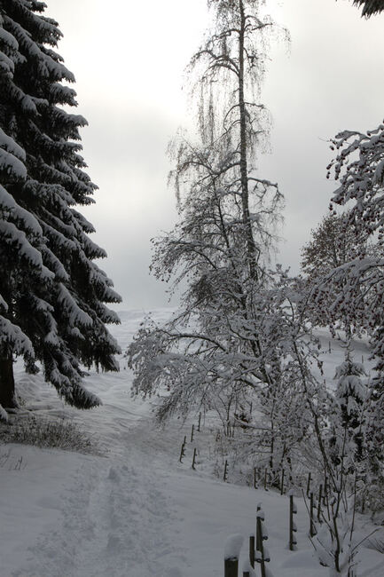 Au bord du chemin... emmitouflés de blanc