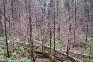 Un fer à cheval pourrait porter malheur aux forêts de la région