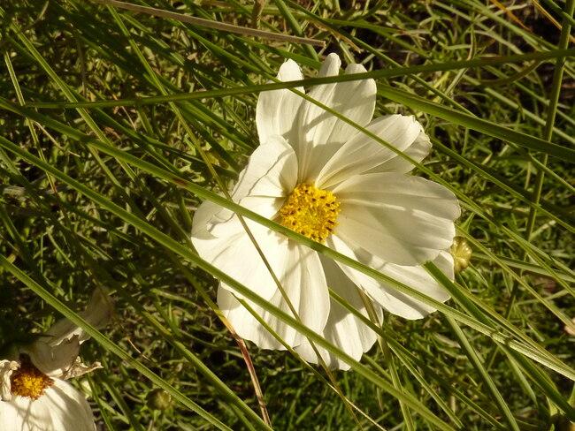 Les mosaïcultures de Montréal - Le jardin fleuri