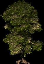 PNG képek: Fű, fa bokor