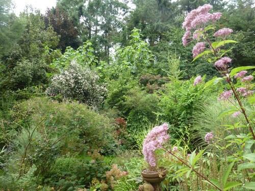 Septembre dans mon jardin