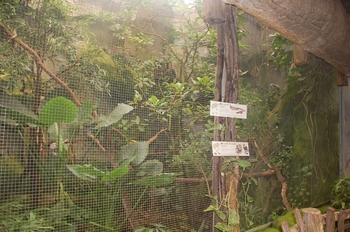 zoo cologne d50 2012 087