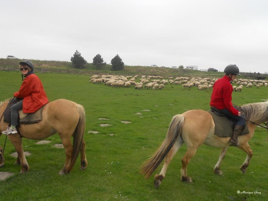 moutons-0363.jpg