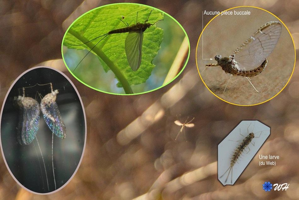 Un insecte qui a du piquant