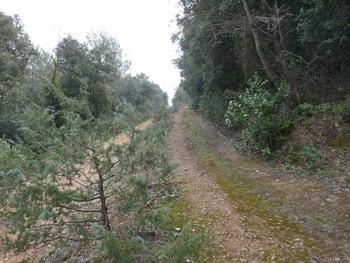 Au croisement avec la trace de l'ancienne voie ferrée (à droite).