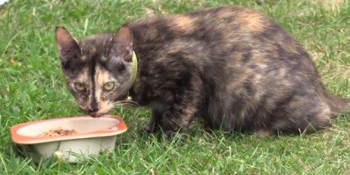 Une chatte disparue à Toulouse retrouvée à Saran !
