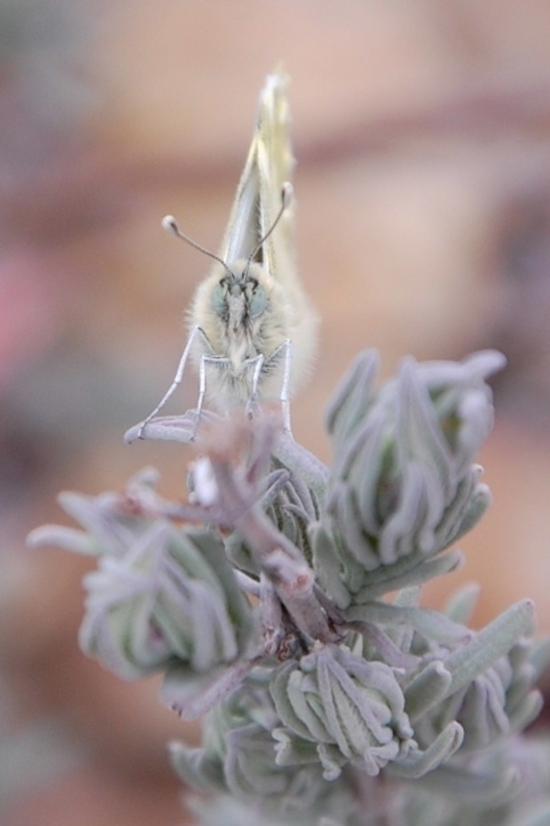 unpapillonmar13b