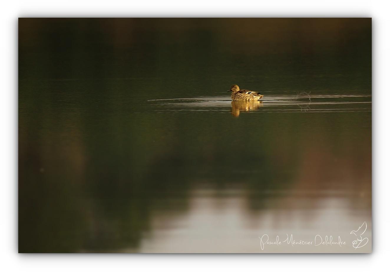 Cohabitation sur le lac...