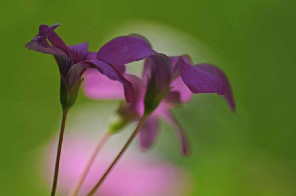 Fleurs-9 2499j