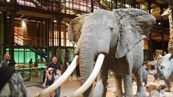 elephant galerie evolution