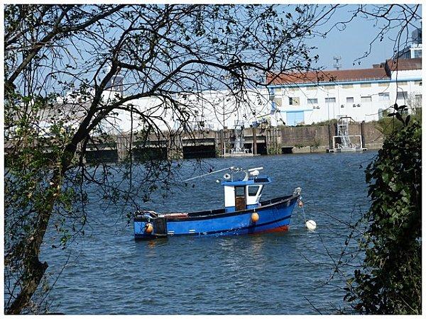 bateau-bleu-et-branches.jpg