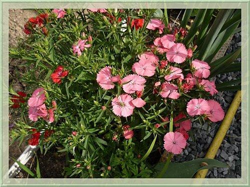 fleurs-27-4-2009--1-.jpg