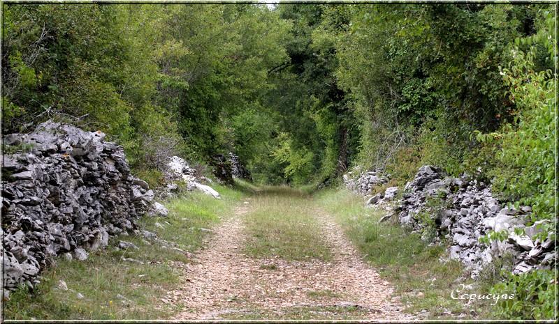 Chemins du Lot 1- sur le Causse