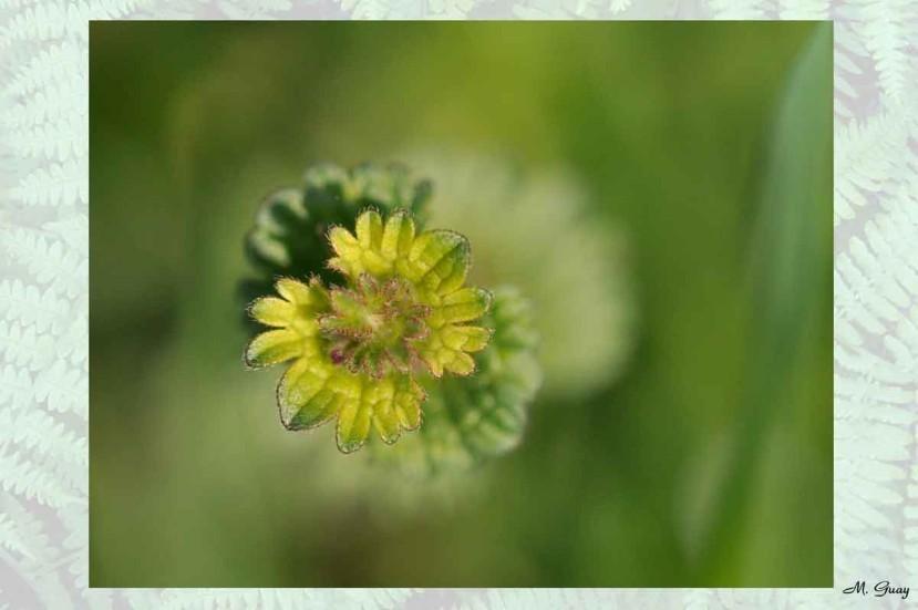 fleur-aquarelle-6314.jpg
