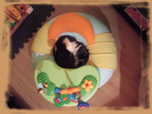 Pour dormir, un chat ça squatte n'importe où