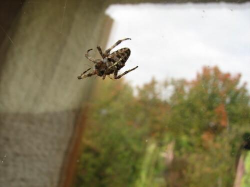 arachnophilie