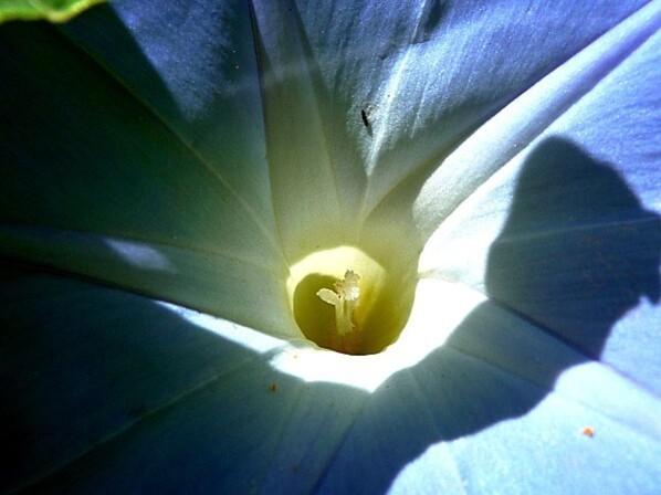 Nature31.08.12-097-copie-1.JPG
