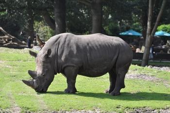 dierenpark emmen d90 099