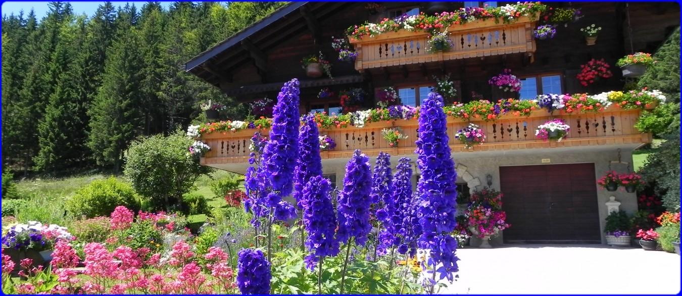 de belles fleurs dans le Doubs