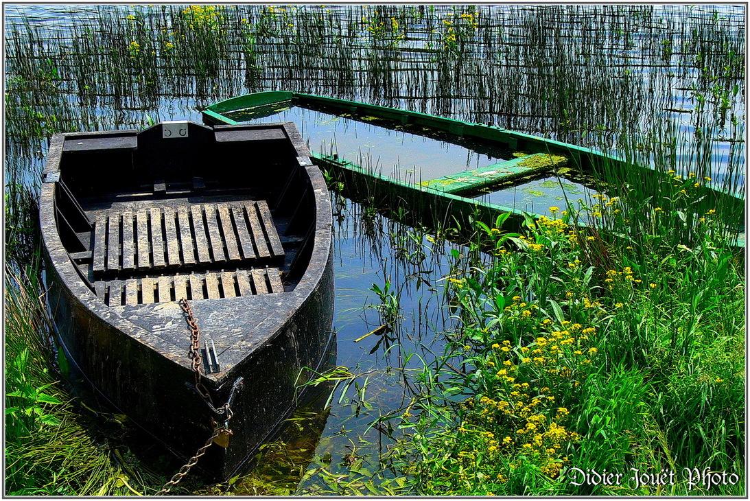 85 - Vendée / Lac du Jaunay