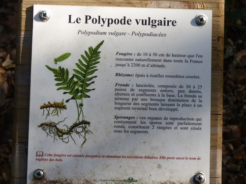 Les Dolmens (Barjac - 30)
