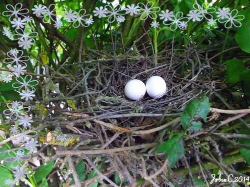 nid de pigeons