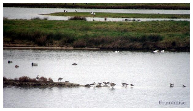 Noirmoutier Marais de Mullembourg réserve ornithologique