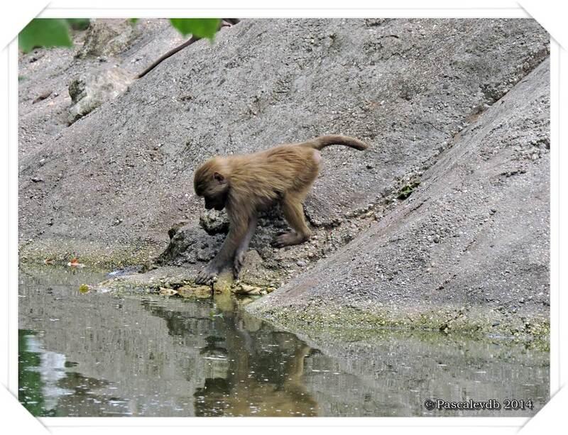 Zoo du Bassin d'Arcachon à La Teste de Buch - 14/20