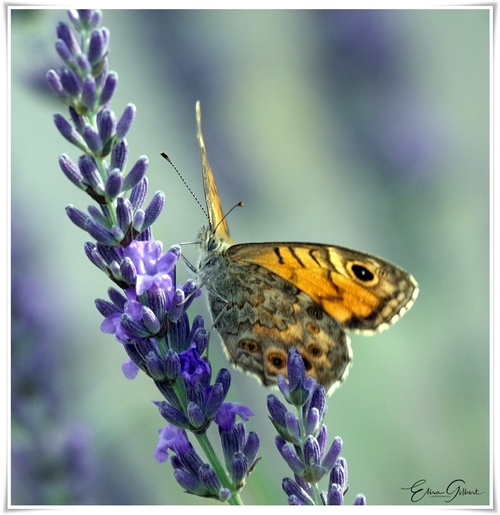 Dans la lumière des papillons