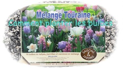 Plantation de bulbes de printemps