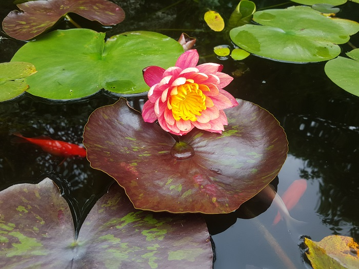 Dans le bassin